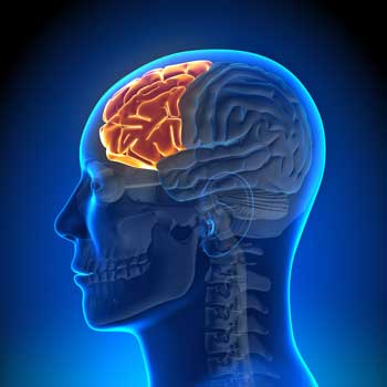 how to develop your prefrontal cortex